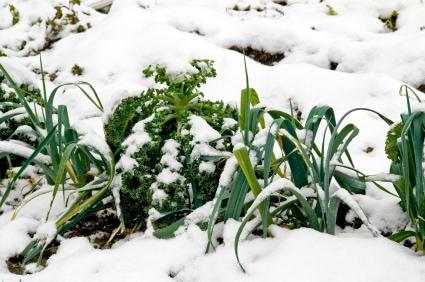 Garden survives Winter